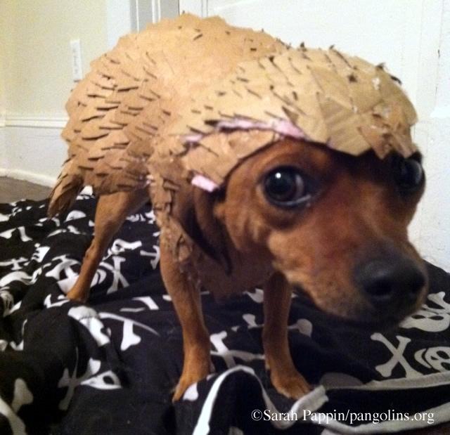 Pangolin-Loving Pups How to Make a Pangolin Dog Costume 0 & Pangolin-Loving Pups: How to Make a Pangolin Dog Costume - WORLD ...