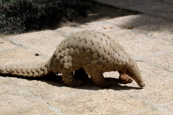 http://www.worldpangolinday.org/