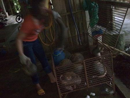 Undercover reporters in Vietnam enter the gruesome world of pangolin smuggling and divulge their shocking story.